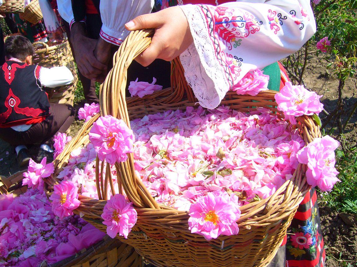 iran roze festival